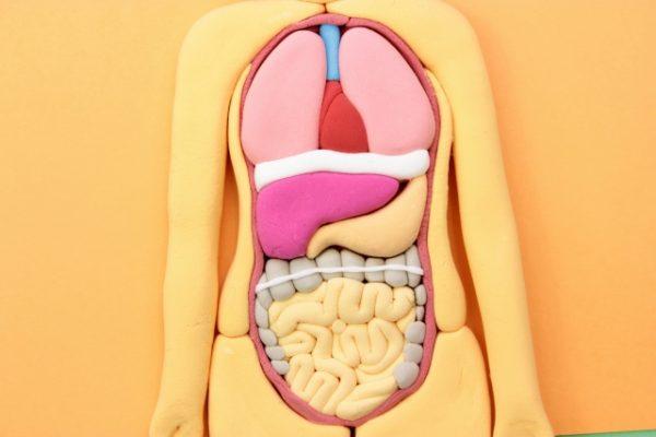 内臓のイメージ
