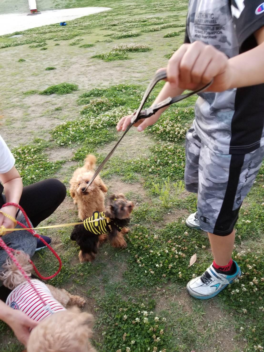 内山家の犬ポンポンと仲間たち