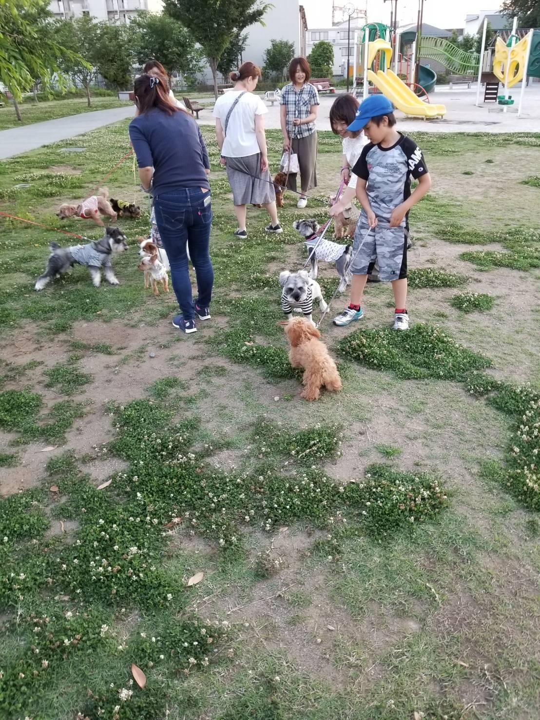 犬の散歩の様子